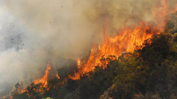 Algeria_Forest_Fire